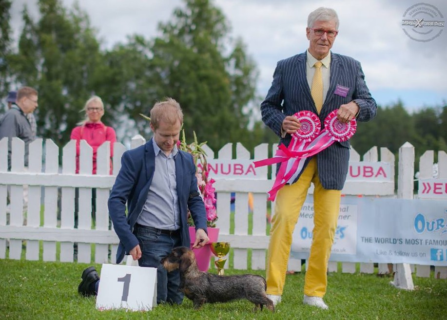 "BEST IN SHOW JUNIOR and BEST IN GROUP Tiny Trotter's Heart Of Minuet ""Myy"""