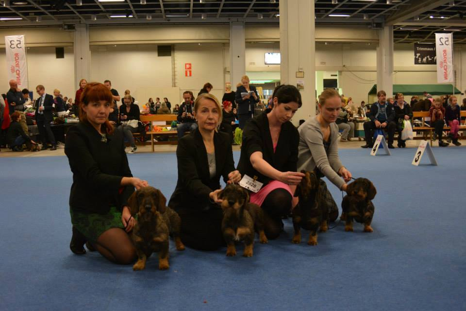 BOB -breeder both Winner Shows kennel Tiny Trotter's