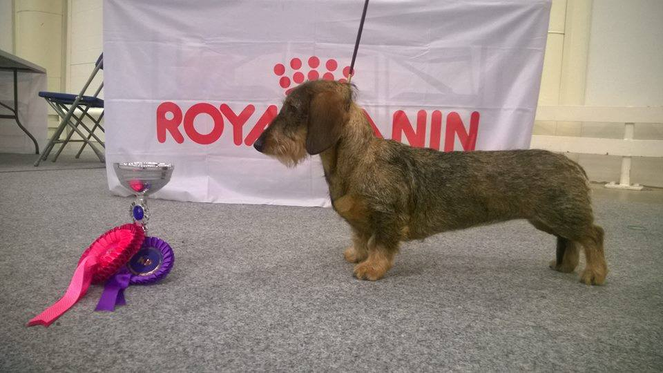 BOB -puppy Winner 2015 Tiny Trotter's You Are The One